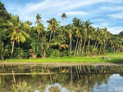 Arrozal en Filipinas