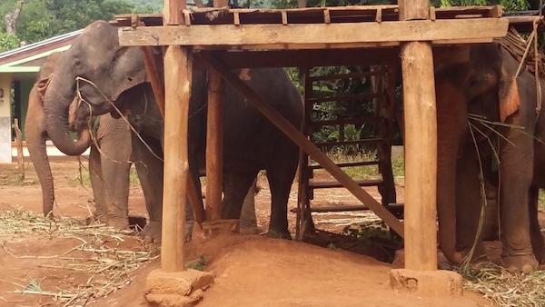 Elefantes en Chiang Mai Tailandia