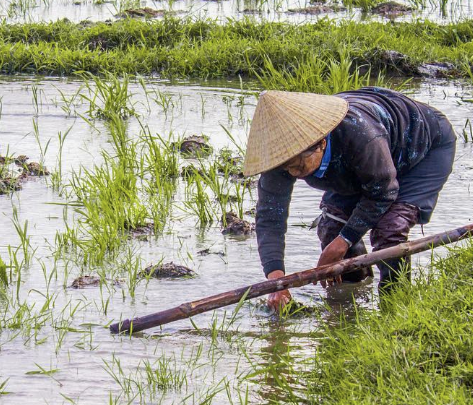 14 Lugares Que Ver En Vietnam