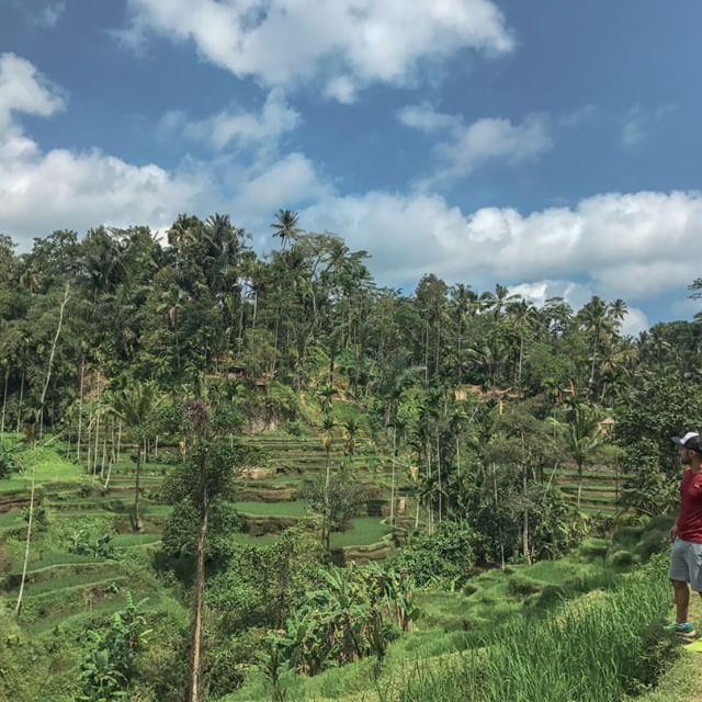 tegalalang terrazas de arroz en ubud