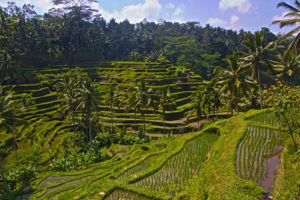 Ruta de 15 días por Indonesia Bali